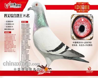 2019中国杯山东舜峰站四关鸽王35位!