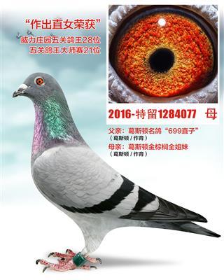 金棕�埃ǚ琴u品)