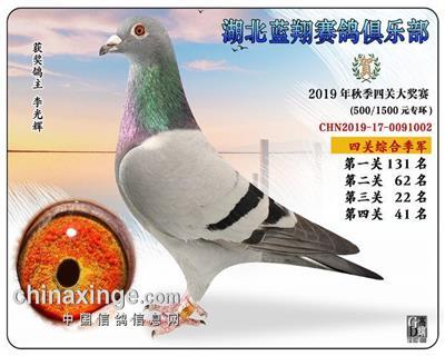 2019蓝翔鸽王3位