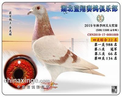2019年蓝翔鸽王22位