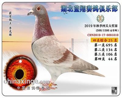 2019年蓝翔鸽王25位