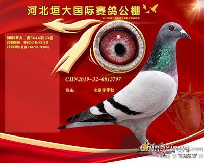 河北垣大国际赛鸽公棚决赛63名拿破仑雌