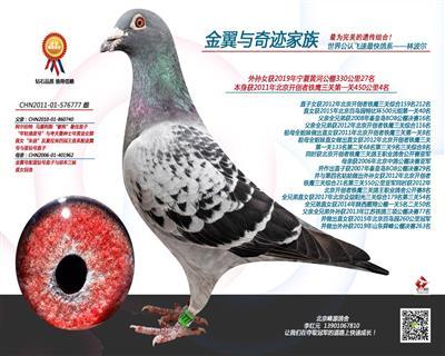 获2011年北京开创者铁鹰三关第一关四名