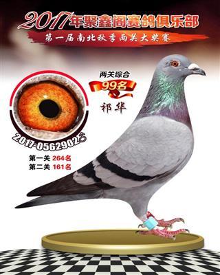 上海聚鑫阁南北双关综合获奖鸽99名