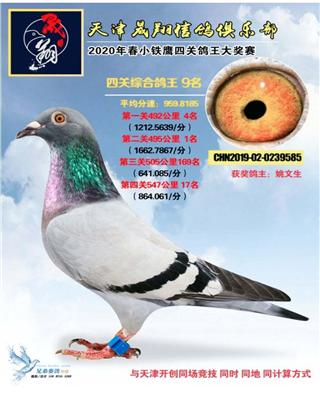 天津晟翔四关鸽王9名