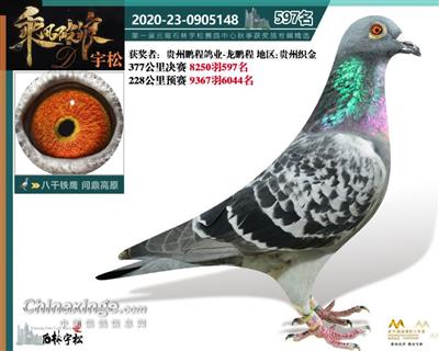 2020年秋季云南石林宇松赛鸽中心597