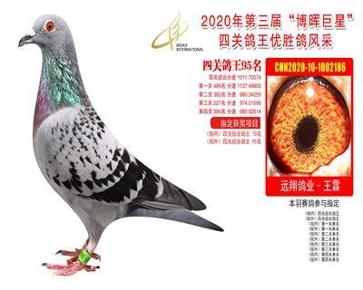 江苏博晖赛鸽俱乐部四关鸽王95名