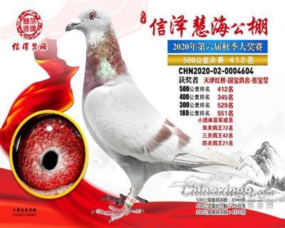 国宝鸽舍-2