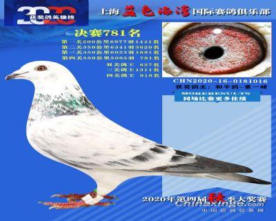 上海蓝色海湾决赛781名