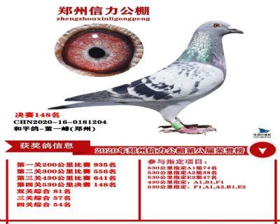 郑州信力决赛148名