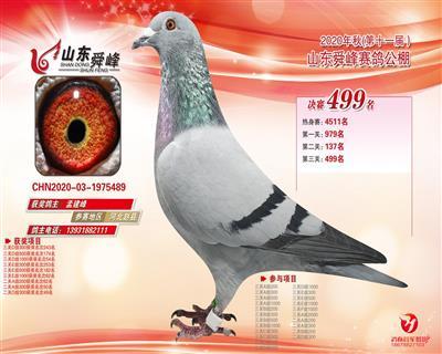 20秋季赛绩鸽