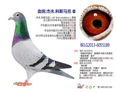 外籍鸽189