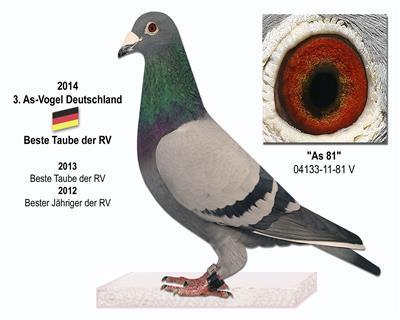 全德国雄鸽鸽王季军-省级鸽王冠军