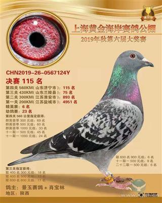 上海黄金海岸获奖鸽