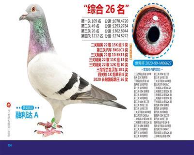 2020世界杯长阳国际站四关综合26位