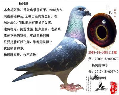 杨阿腾-1