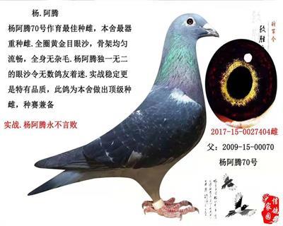 杨阿腾-2