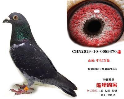 吴淞李鸟06