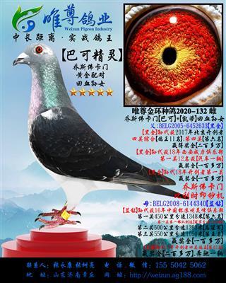 """【巴可精灵】乔斯佛卡门""""黄金配对""""直孙女"""