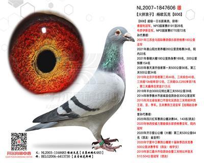 【火拼浪子】:杨欧瓦克【483】直子