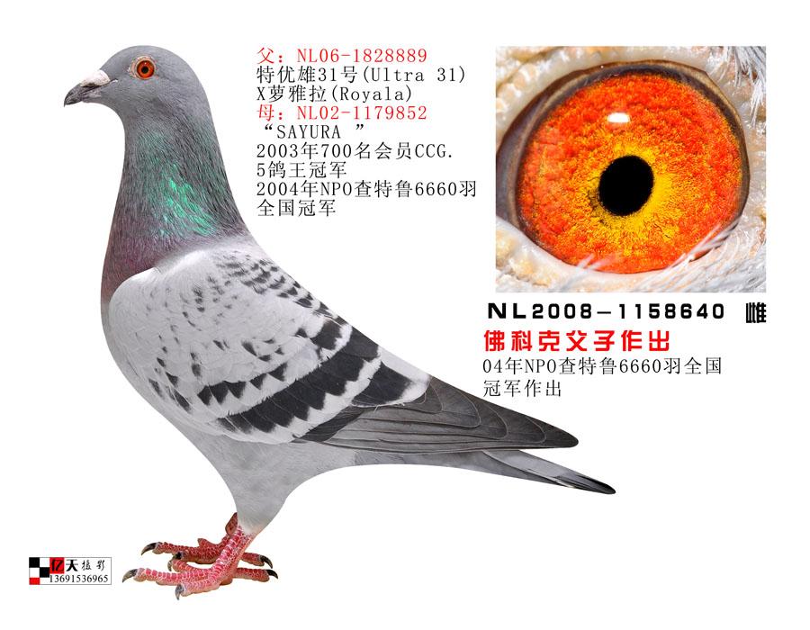 NL2008-1158640
