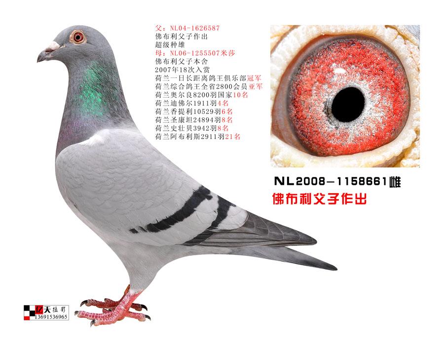 NL2008-1158662