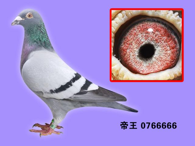 庆华05-666