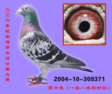 庆华04-371