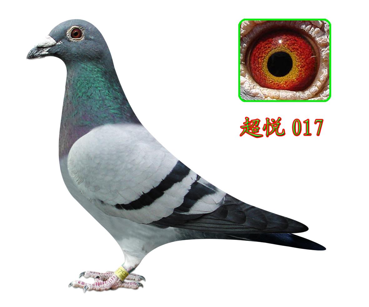 超悦017