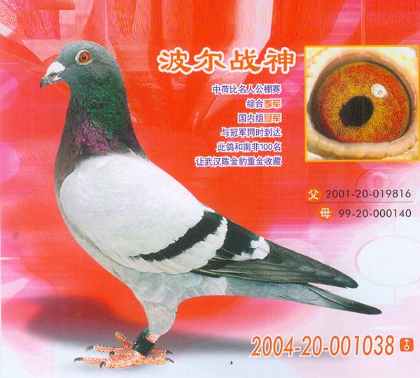 波尔战神(中荷比名人公棚赛季军)