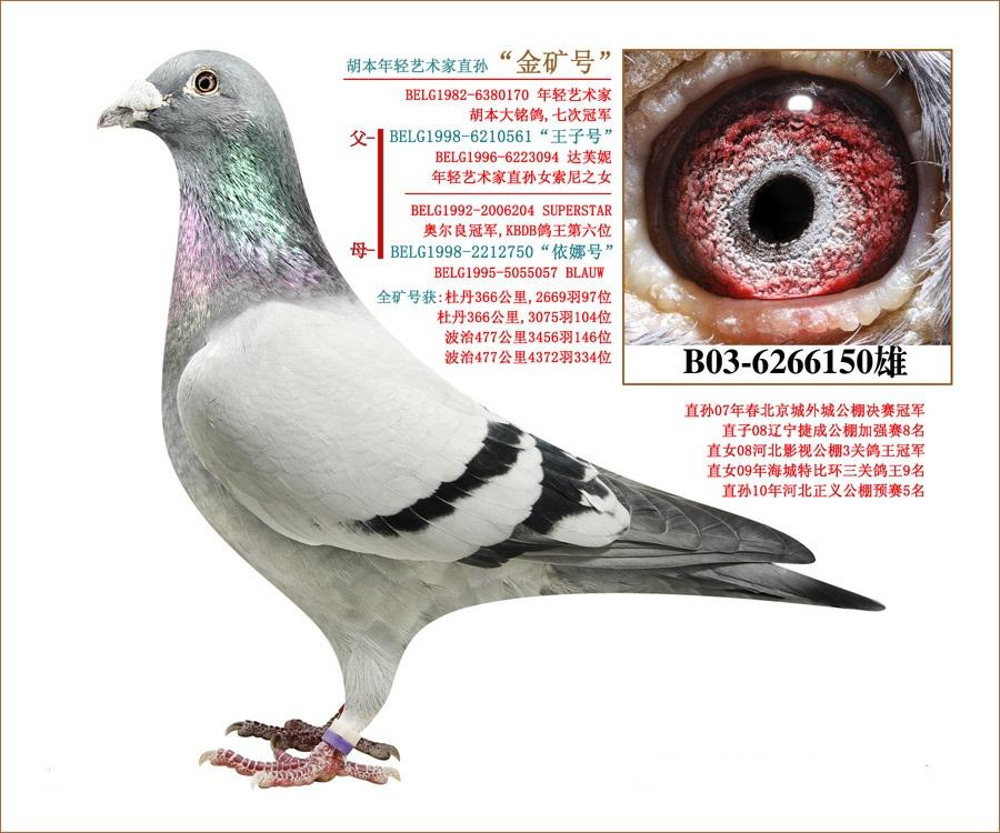 胡本年轻艺术家【金矿号】