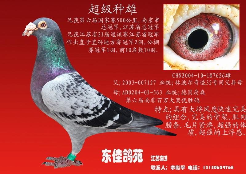 超级种鸽2