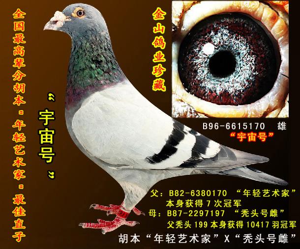 金山鸽业精品种鸽正在火热拍卖