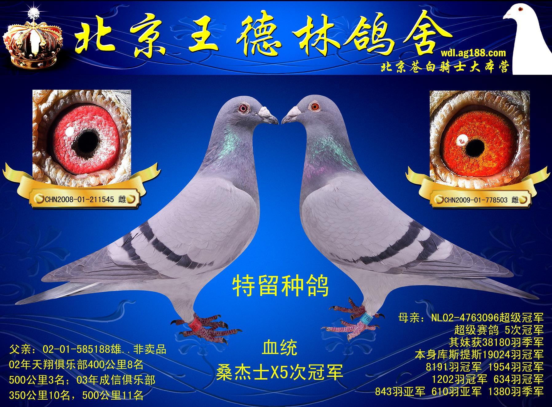 查信鸽脚环号的网站