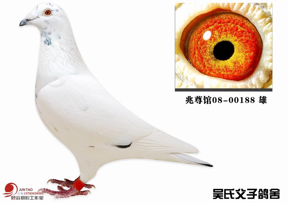 苍白188(仅供欣赏)