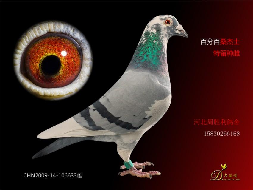 视频鸽教学鸽子图示鸟动物850_637鸟类蟒蛇的狮子图片