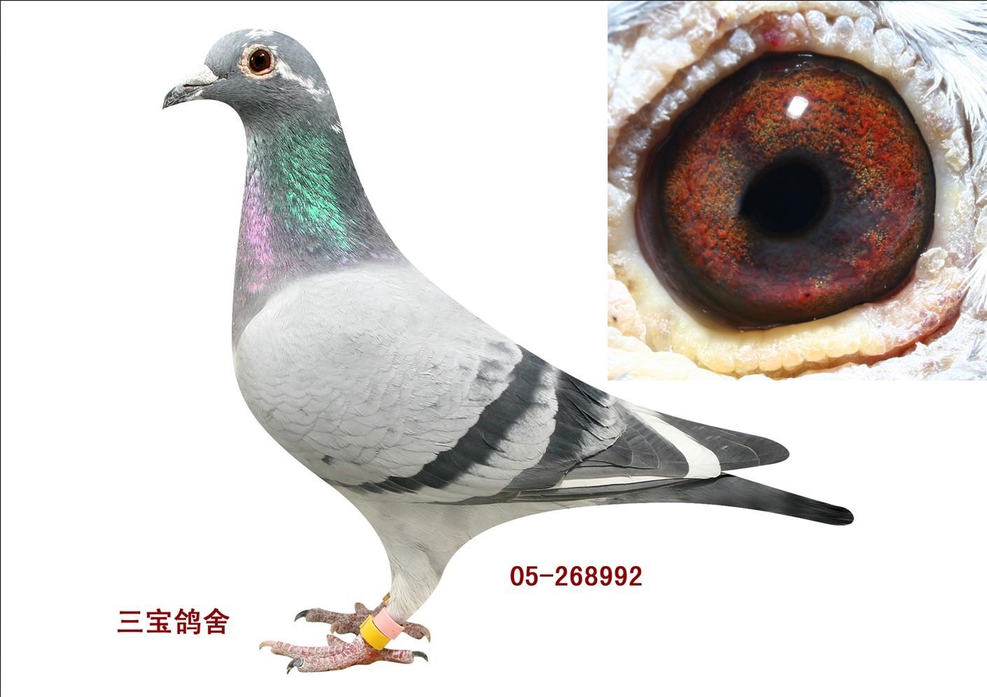 05年远方蓝通决赛冠军