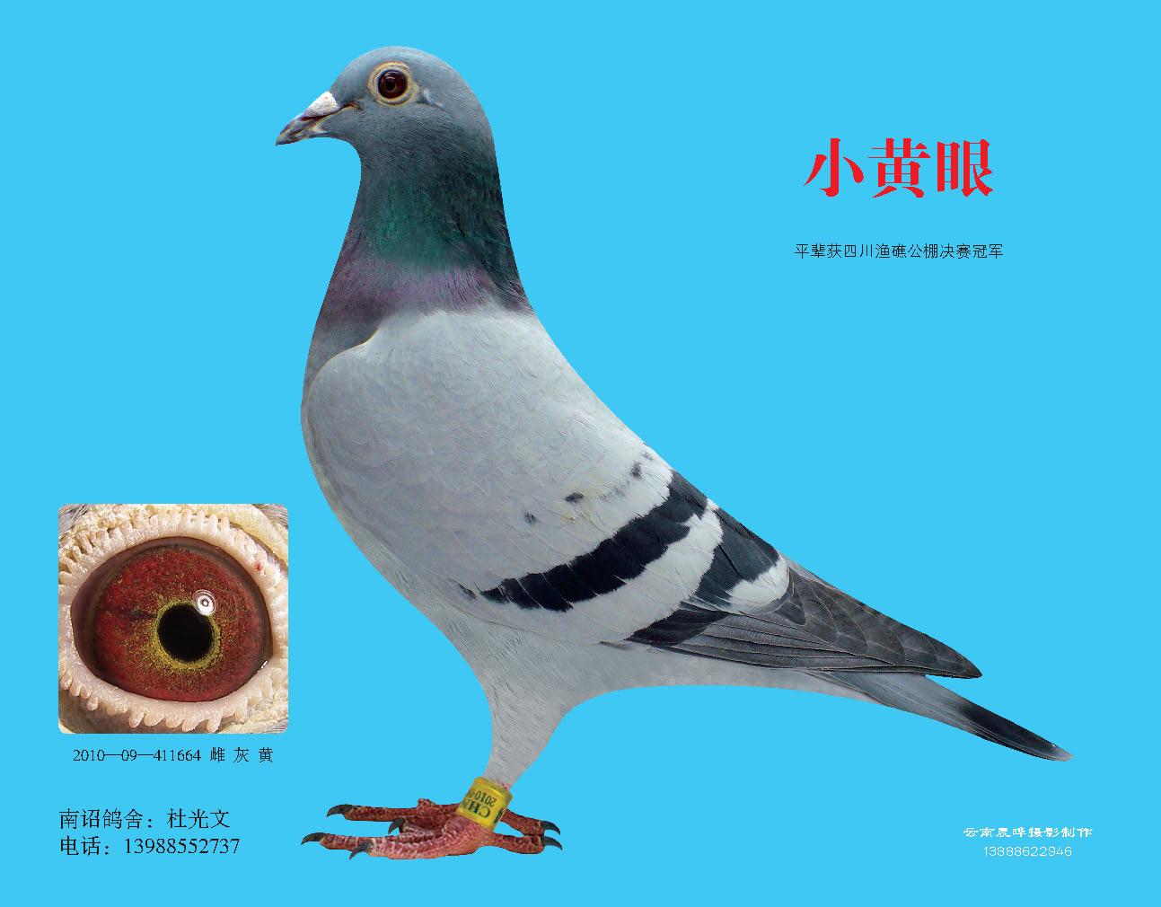 鸟类的共同特征