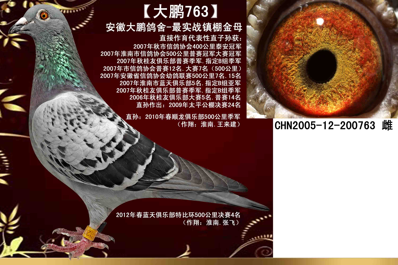 【大鹏763】大鹏鸽舍