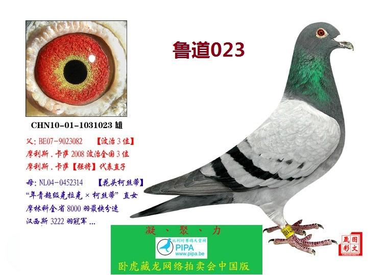 鲁道023