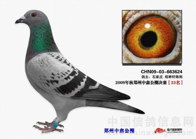【中鑫23名】大鹏鸽舍(已售)