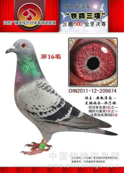 2011江苏铁鸽决赛16名