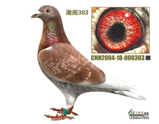 CHN2004-18-000303