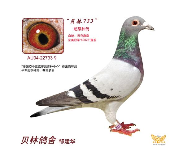 Au-04022733