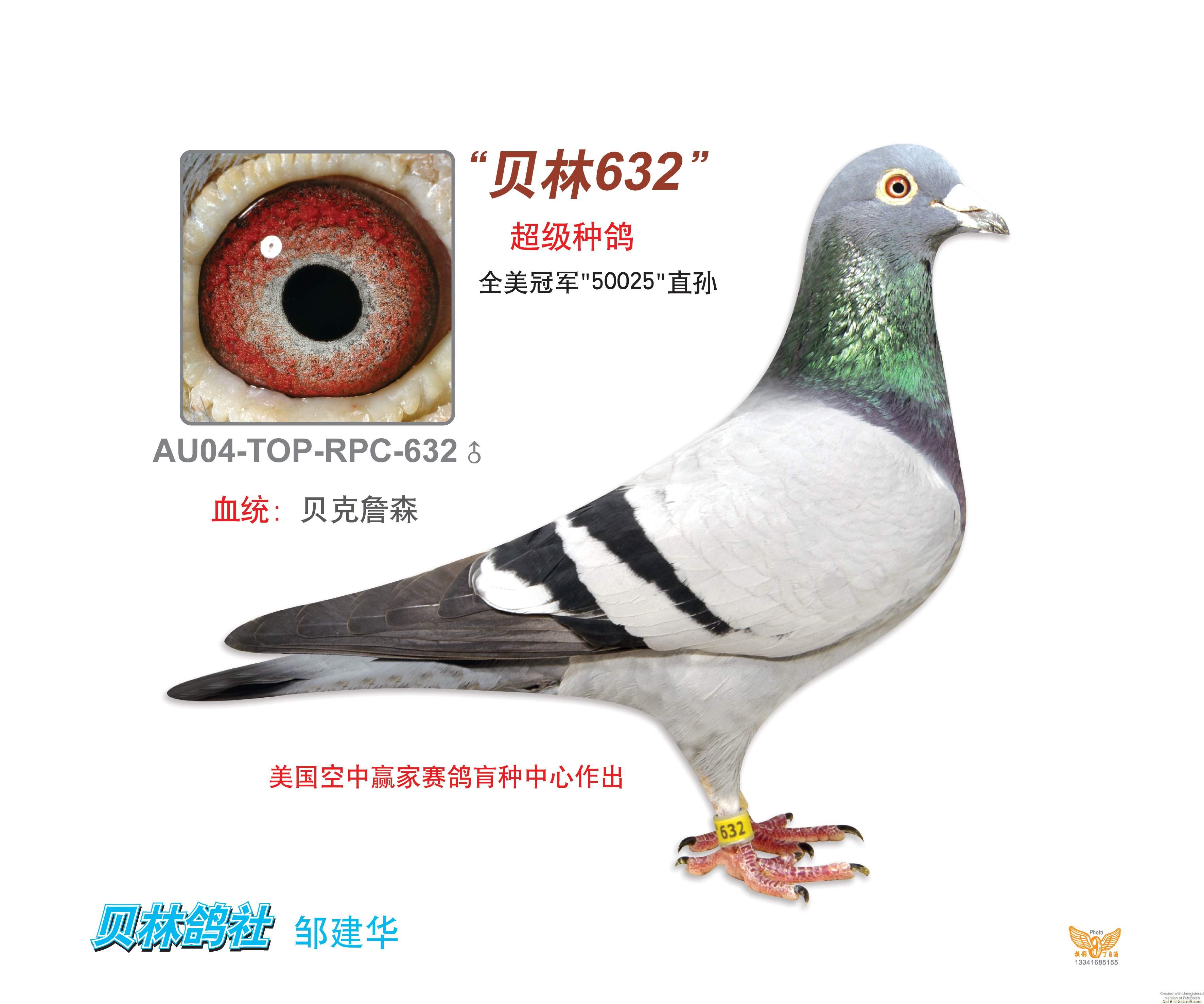 AU-04-TOP-632