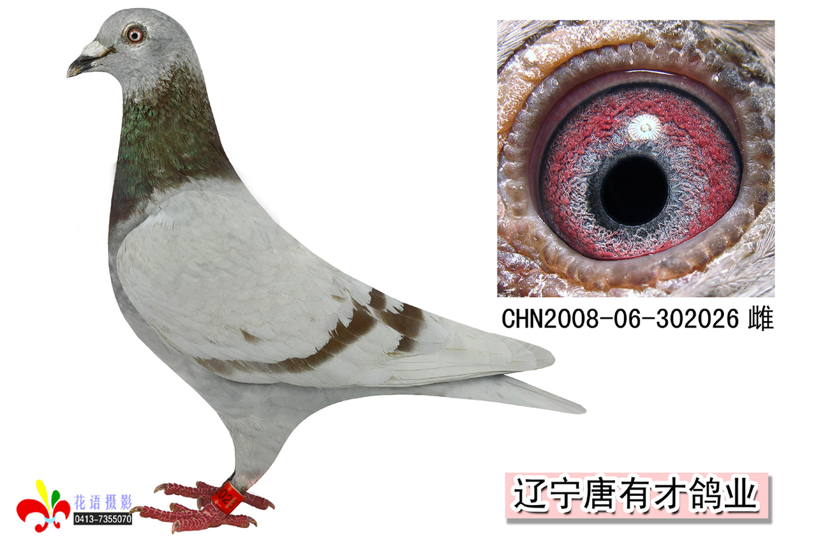 """惠翔""""功臣""""""""一方霸主""""026(已售"""