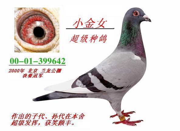 女鸽鸽舍图片图片下载