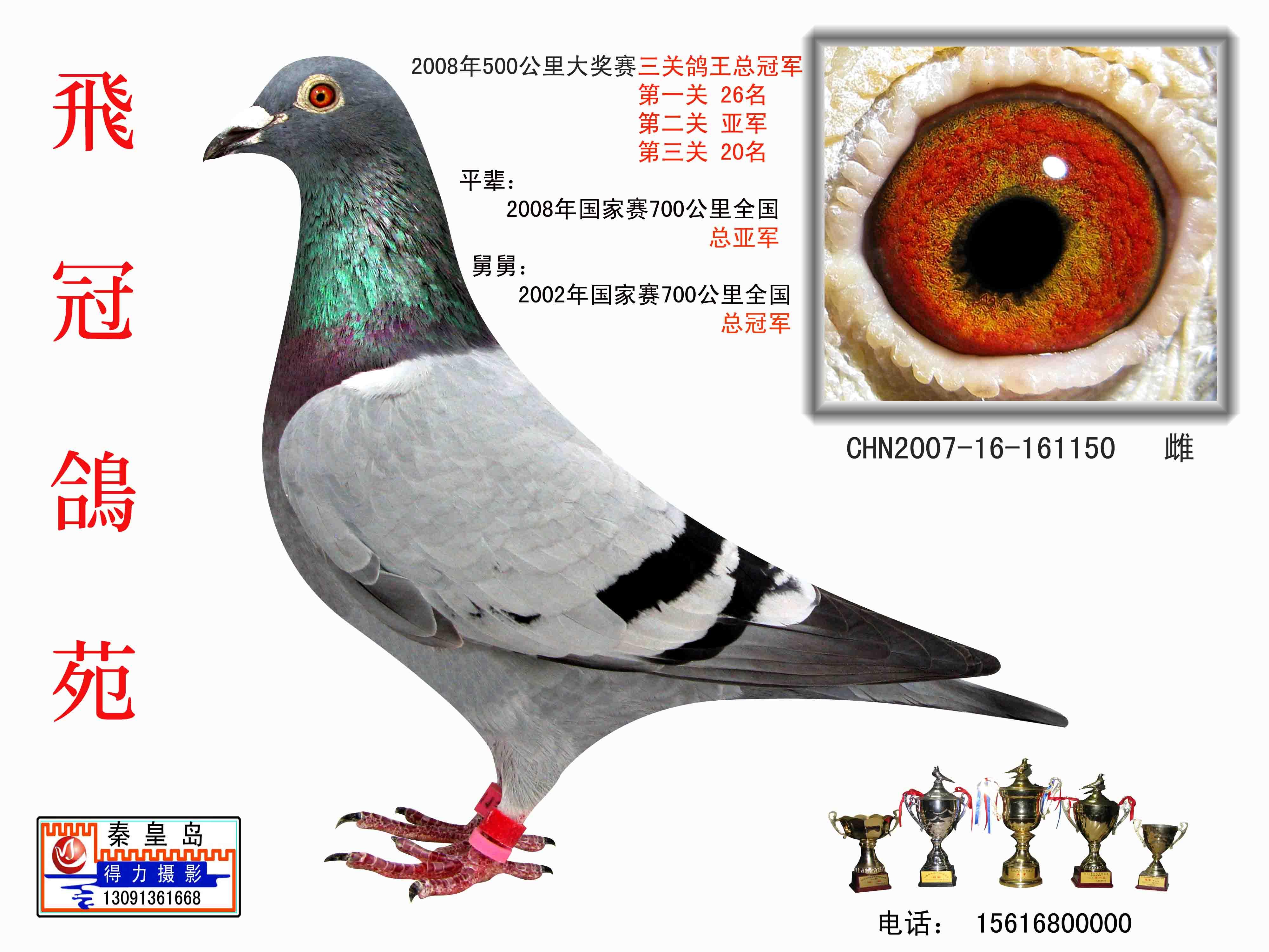 三关鸽王总冠军