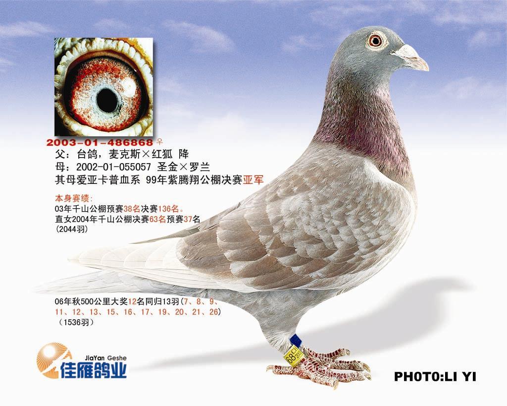 詹森红狐(03千山公棚决赛136名)