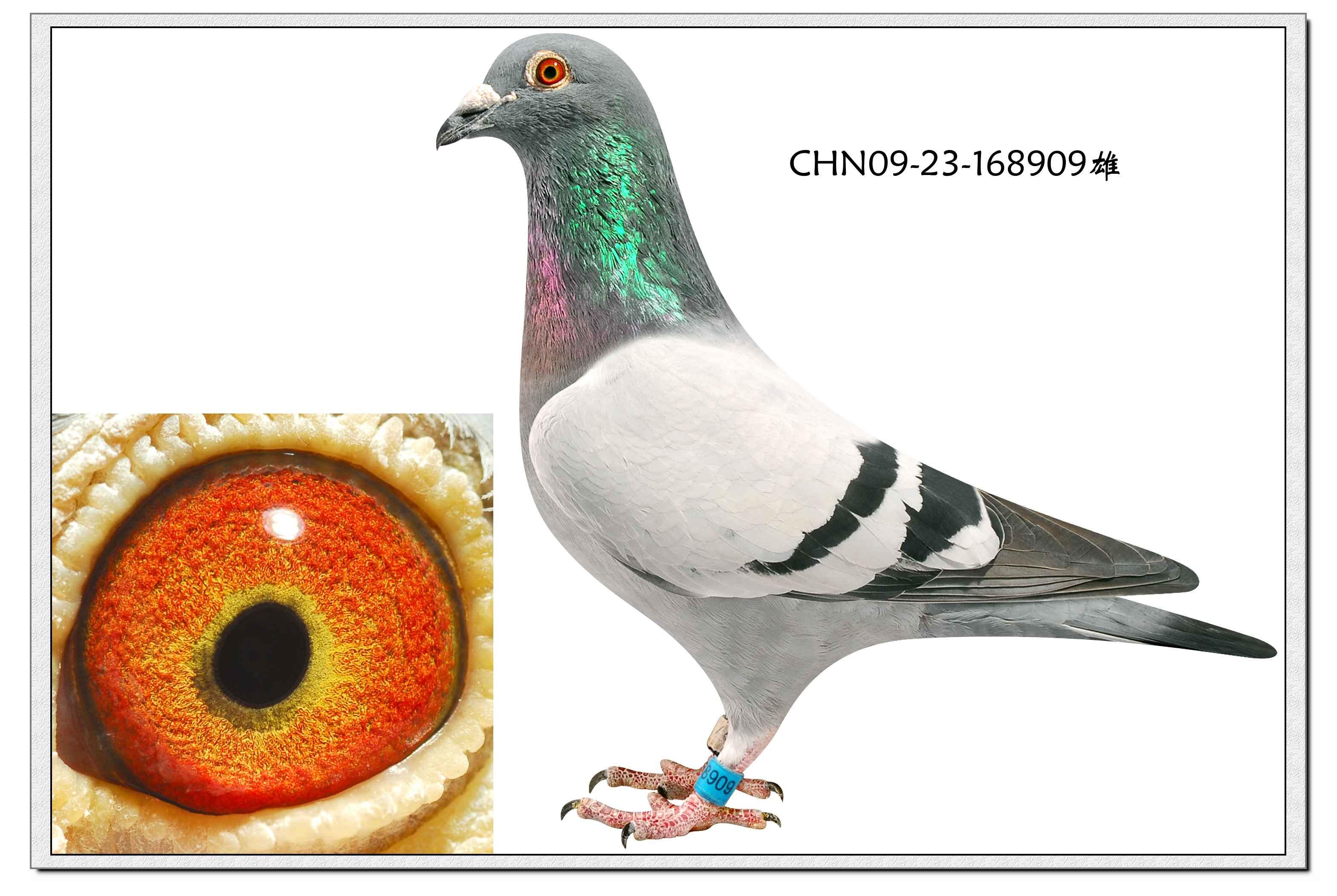 动物鸽鸟类鸽子图示鸟恐龙3136_2104两只教学主题曲图片
